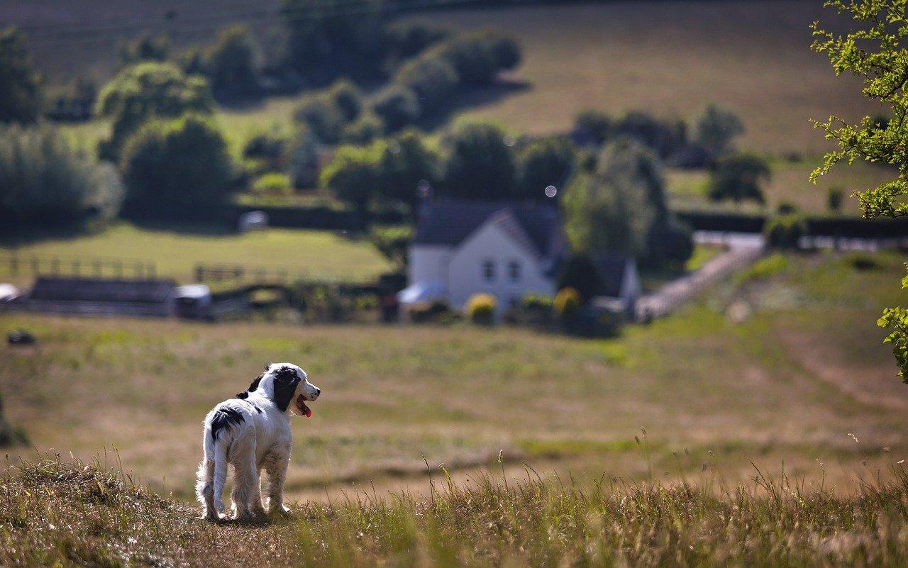 景色を見つめる犬